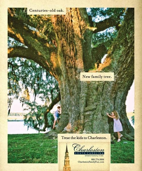 CVB Oak Tree